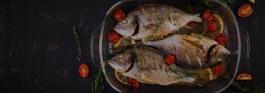 fish intro
