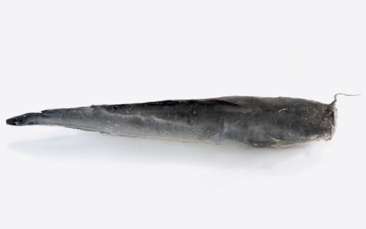 Catfish Whole (Frozen) 2.5KG