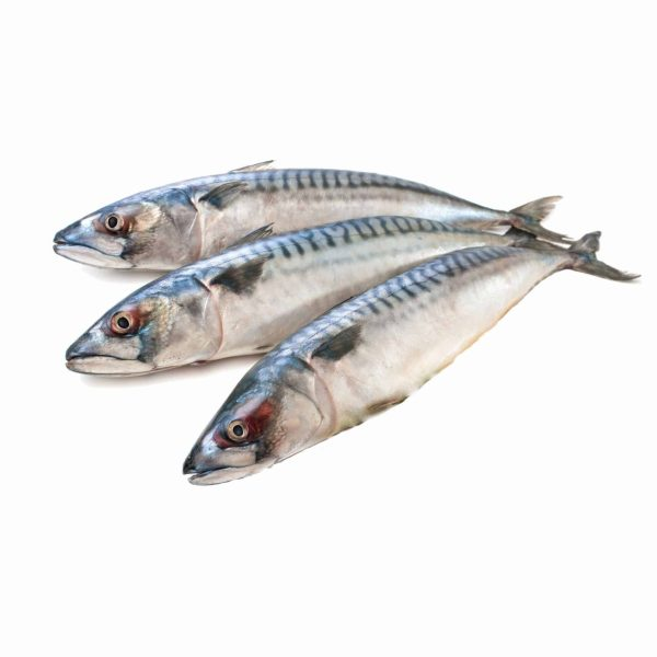 Whole Mackerel 1.2KG